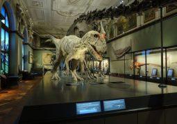 Dinosaur Hall
